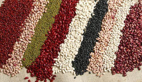 延迟降雨影响了豆类的播种 特别是短期作物 种植面积可能远远落后于去年的水平
