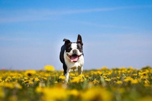 狗在保险业中占据最大份额的国家