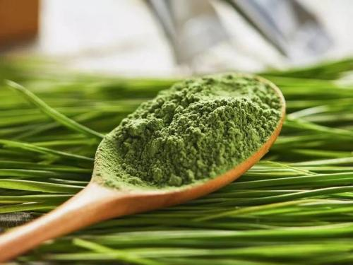 研究人员开发出可持续的基于绿茶的皮革替代品
