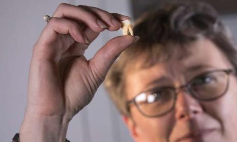 第一批成年臼齿是活化石 具有可以追溯到子宫的健康记录