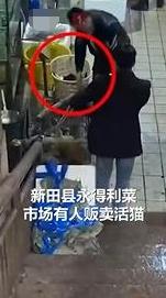 残忍!官方回应湖南永州市场卖现宰活猫 现场大概有上百只