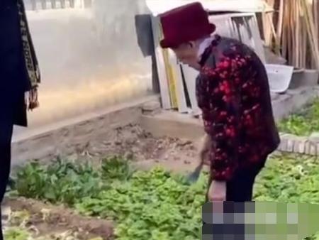 河南一97岁奶奶忙着给亲戚摘菜 众人走后一幕令人心酸又暖心【图】
